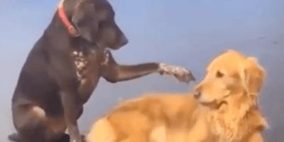 Ruby coccola un cane