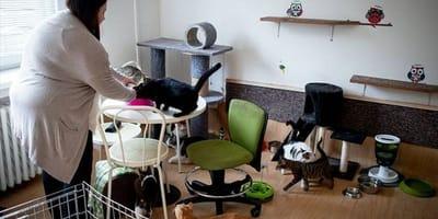 Koty_w_małym_mieszkaniu