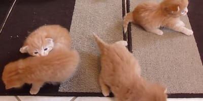 This could be the cutest cat video you'll ever see!