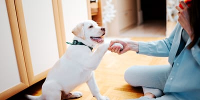 ¿Cómo enseñar a mi perro a saludar? Te damos los mejores consejos