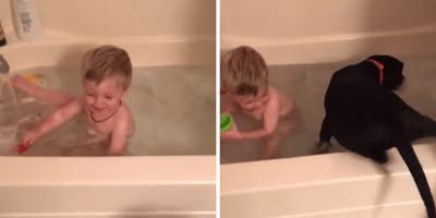 niño perro bañera
