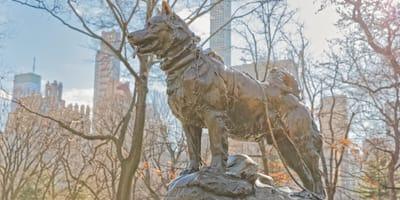Die Geschichte von Balto, dem berühmten Schlittenhund
