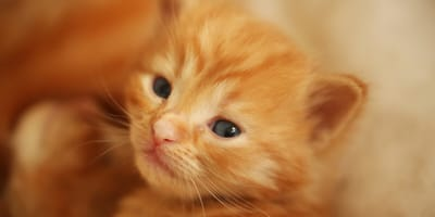 How to take care of new born kittens