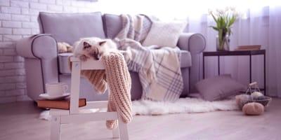 ¿Cómo es el departamento ideal para un gato? ¡Te damos las 5 claves!