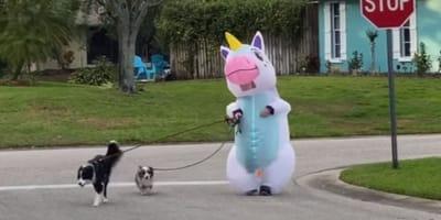 Dwa psy na smyczach wyprowadzane przez nadmuchiwanego jednorożca