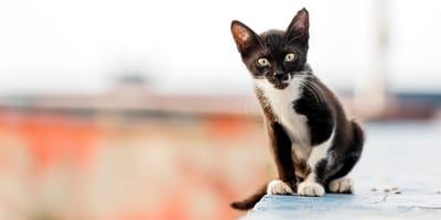 gato atrapado en la pared es rescatado por bomberos.