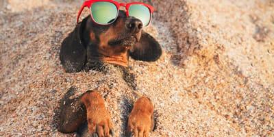 Gafas de sol para perros: ¿salud o estética?