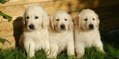 Nomi per cani femmine: idee e suggerimenti originali