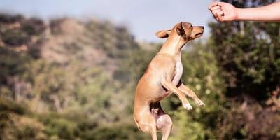 Luring nel cane: cos'è questa tecnica di addestramento?