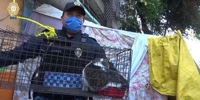 gatita atrapada en edificio desalojado es rescatada