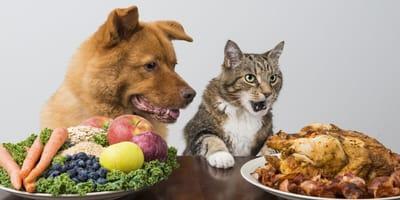 como alimentar perro gato coronavirus
