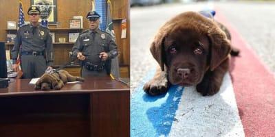 Police comfort dog