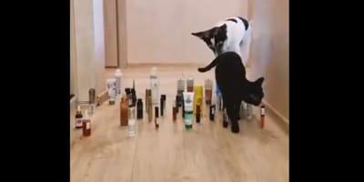 Kot kontra pies: kto będzie zwinniejszy? To zależy!