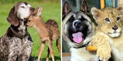 perros con bebes animales