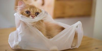 ¿Tu gato juega con bolsas de plástico? ¡Ten cuidado!