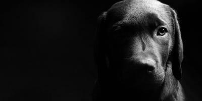abandono y maltrato de mascotas durante la cuarentena