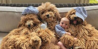 tre-cani-e-un-neonato