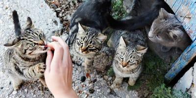 mujer multada bizkaia alimentar gatos callejeros