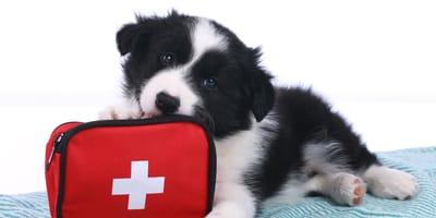 Botiquín de primeros auxilios para perros y gatos