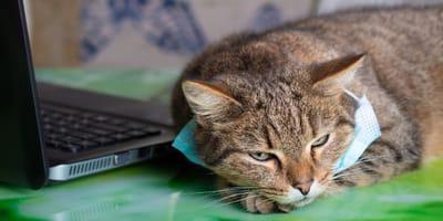 juegos para gatos que te enseñan a corregir errores en cuarentena