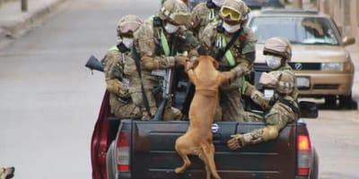 Perro y soldado