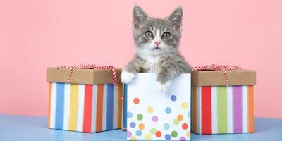 Kleine Katze mit Geschenken