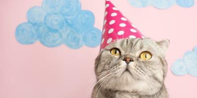 Katze mit Hütchen