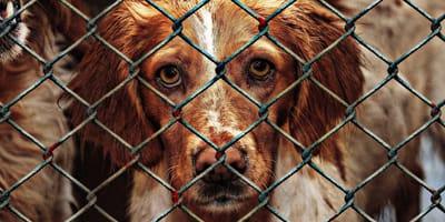 Sad rescue dog