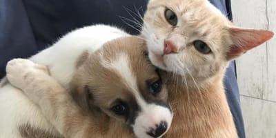 Kotka traci młode i... adoptuje szczenięta. Nie żałuje tego ani przez moment