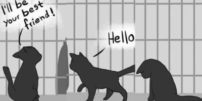 Black cat comic sequel