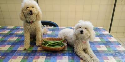 I cani possono mangiare le fave?