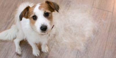 Haarausfall beim Hund: Diese Ursachen könnten dahinterstecken