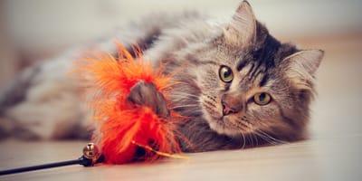 Jugar con mi gato: ¡increíbles ideas para que las pases en grande con tu minino!