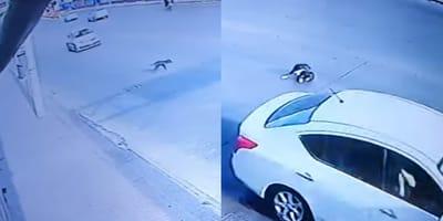 taxista atropella a un perro