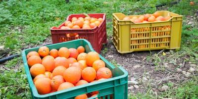 caja naranjas encontraron cachorros xavita