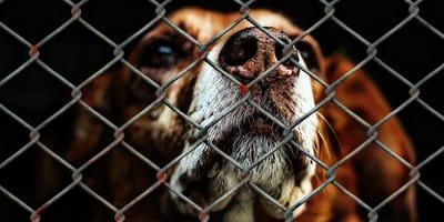 mutt behind shelter bars