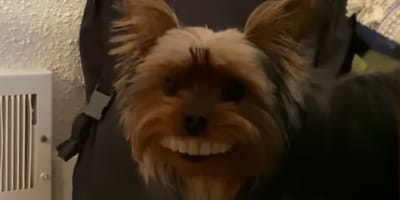 Check out this dog's million dollar smile