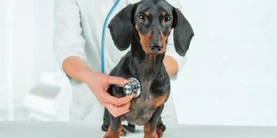 È sbagliato non portare il cane dal veterinario?