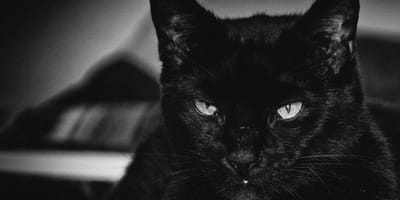 <p>Este gatito fue abandonado al parecer por ser agresivo.</p>