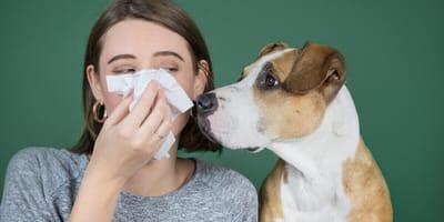 perros detectan coronavirus