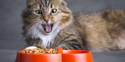 Cibo per gatti fai da te: ricette per tenersi impegnati a casa!