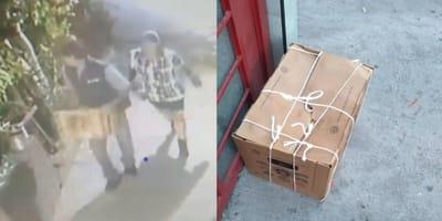 Personas caminando caja de carton cachorros