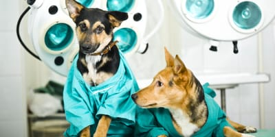 How much does it cost to spay a dog in the UK?