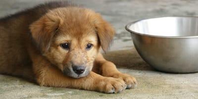 Puppy sitting next to water bowl