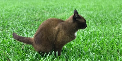 What does black poop in cats mean?