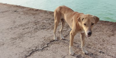 Anorexia in dogs