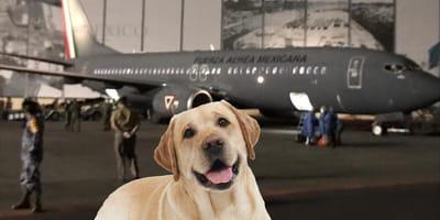 vuelo de repatriación sedena