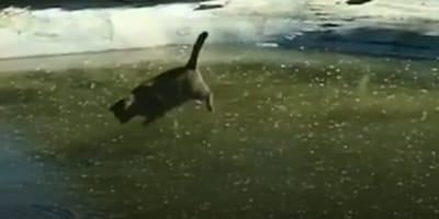 gatto-su-lago-ghiacciato