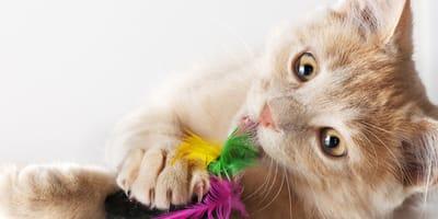 Juegos para gatos: los mejores pasatiempos para mejorar su entrenamiento