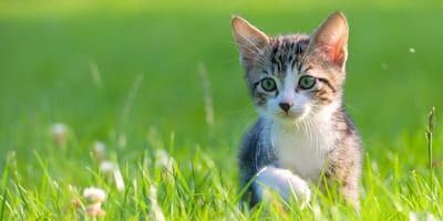 Was steckt hinter dem Mythos der Maikatzen?